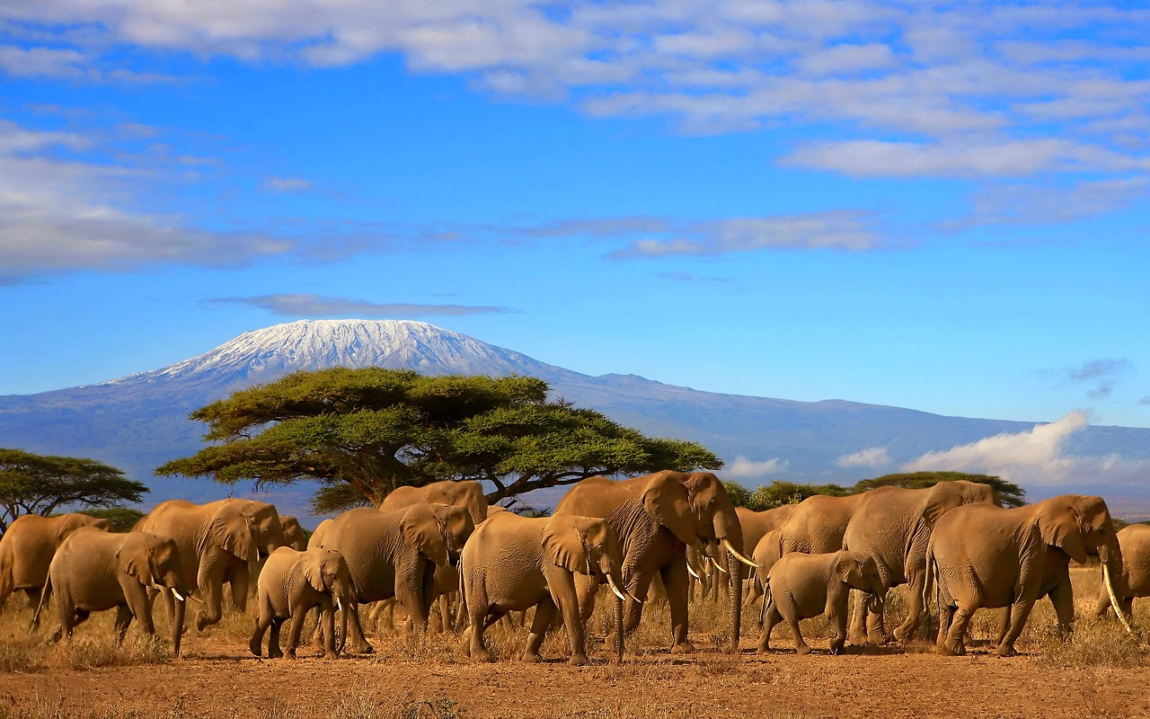 AFRICA Kilimanjaro from web