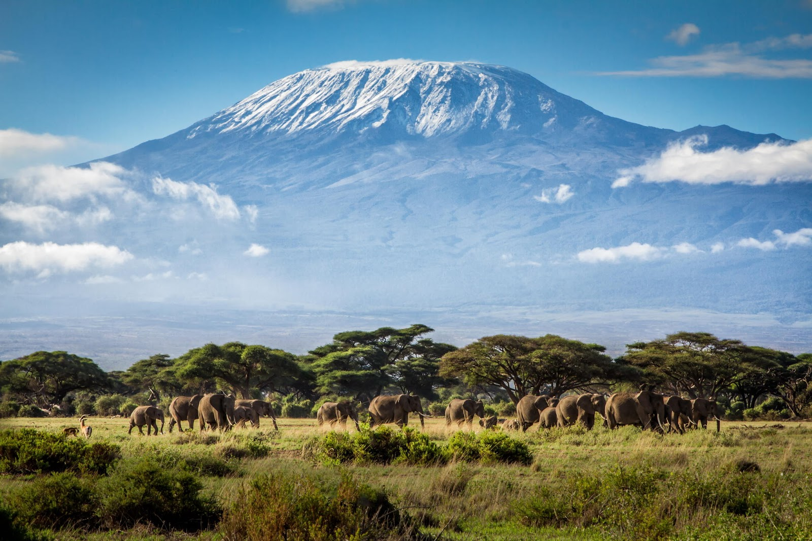AFRICA Kilimanjaro from web2