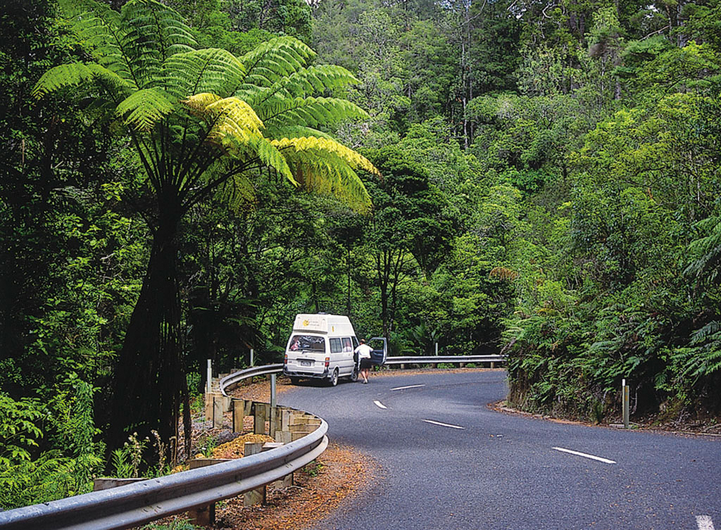 L184 WEB LOW RES Camper Waipoua ForestNZ